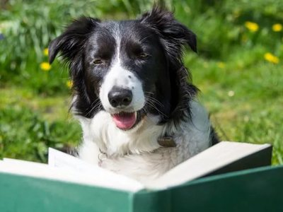 The most intelligent dog breeds in the world. Ranking of dogs intelligence