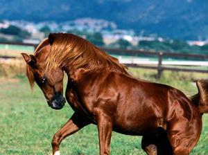 Кличкки для лошадей