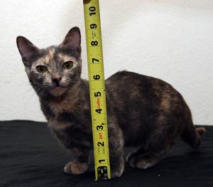 Какие кошки самые маленькие