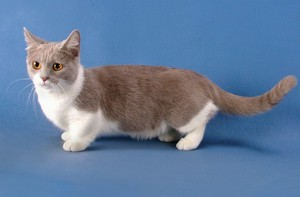 Описание маленькой кошки
