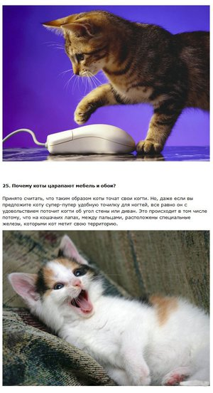 The world through the eyes of cats facts about their ability to see