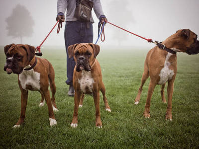 Top strongest dogs in the world