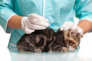 Как праивльно делать вакцинацию