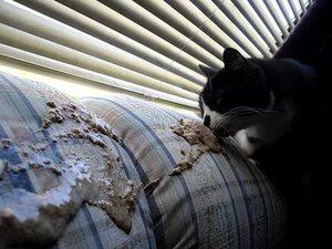 Понос и рвота у кота