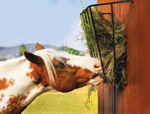 Корма для лошадей