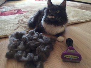 Как чесать кошку фурминатором