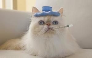 Температура тела у кошки - как правильно измерять