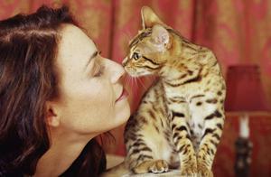 Показатели не здорового кота