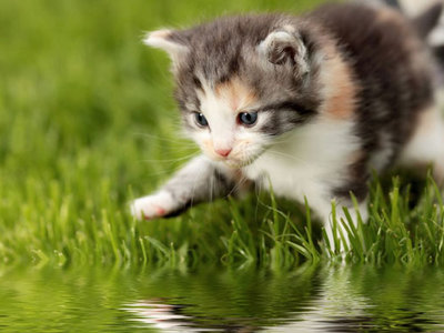 Why cats are afraid of water: main reasons and how to deal with it