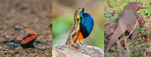 30 Colorful Species of Lizards Found in India | Hunting Fishing
