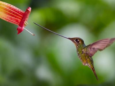 Птица с длинным клювом: необыкновенные птицы