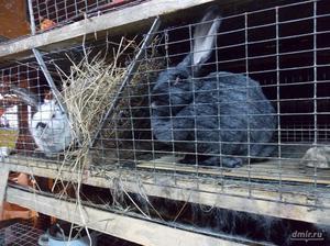 Как выбрать породу кроликов для разведения