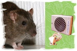 Ультразвук от крыс