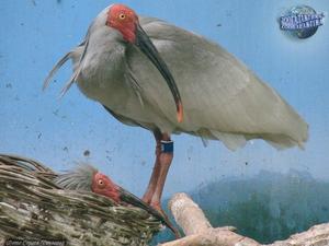 Исчезающие виды птиц