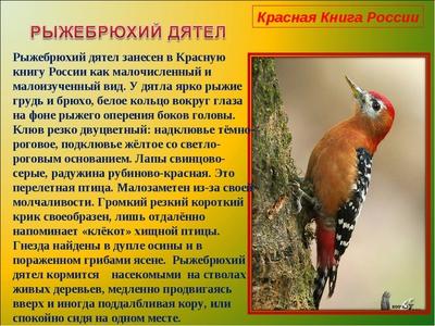 Птицы с красной грудкой и желтым клювом
