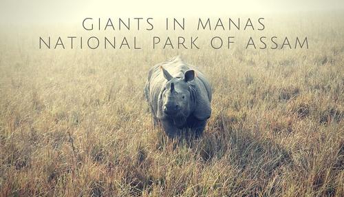 Giants in Manas National Park of Assam