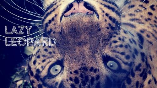 Lazy-Leopard