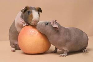 Две свинки скинни