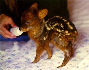Размер самого маленького млекопитающегося