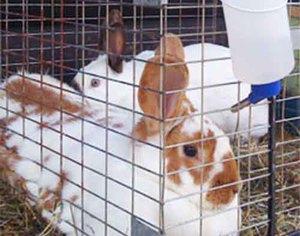 Как сделать поилку для кроликов