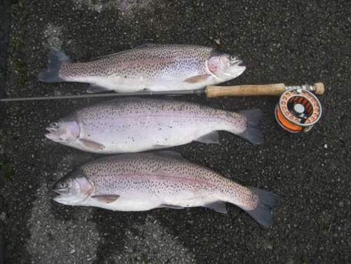 Good rainbows are stocked throughout the spring into Eglwys
