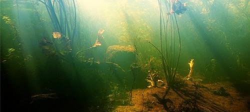 lake-weeds