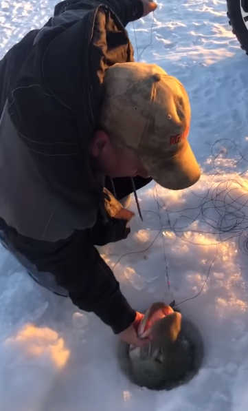 Ice Fishing Musky