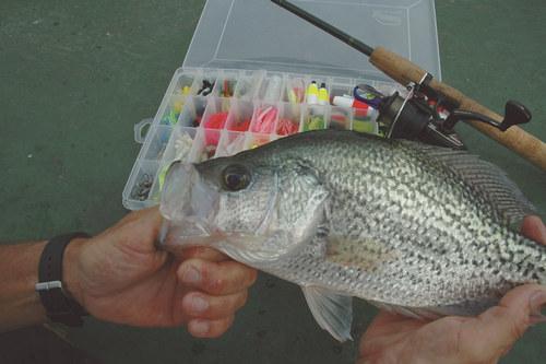 Black Crappie | Florida Fish and Wildlife | Flickr