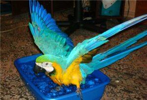 Купальня для попугая