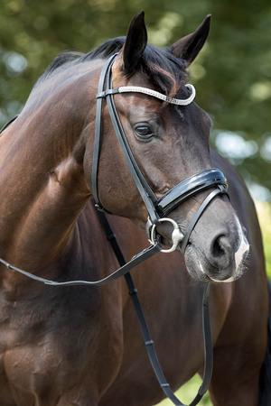 Узда для лошади своими руками