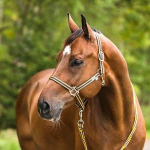 Недоуздок и уздечка для лошади