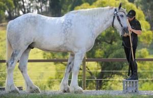 Лошадь – одно из самых красивых и грациозных животных больших размеров