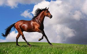 Гнедая лошадь бежит по лугу