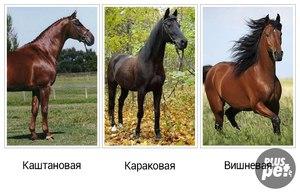 Варианты гнедой масти лошадей