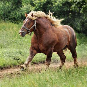 Внешний вид лошади