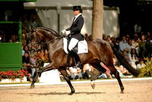 Дорогая лошадь для выставок и скачек
