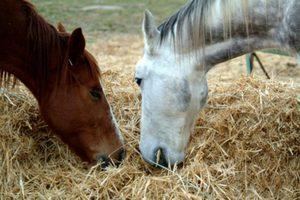 Что любит есть лошадь